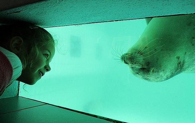 zeehonden-kijken