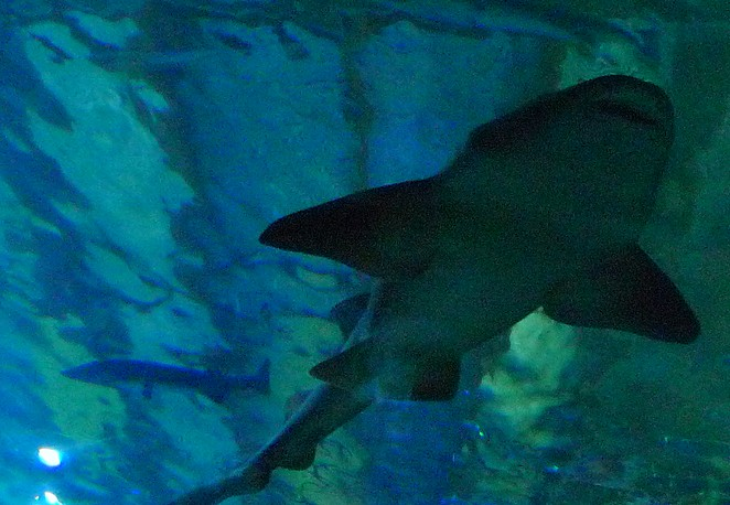 haai-sealife-bangkok