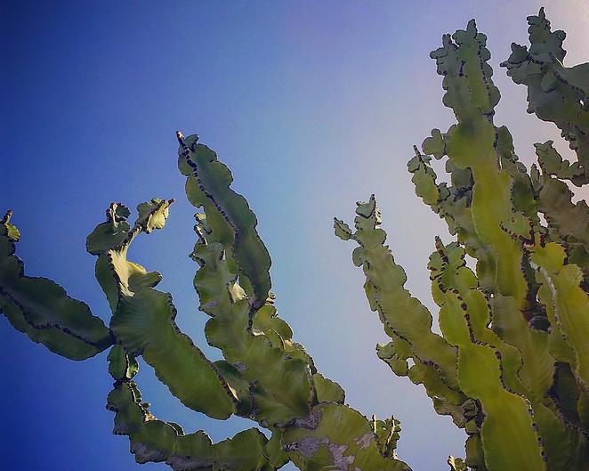 cactus-garden-lanzarote