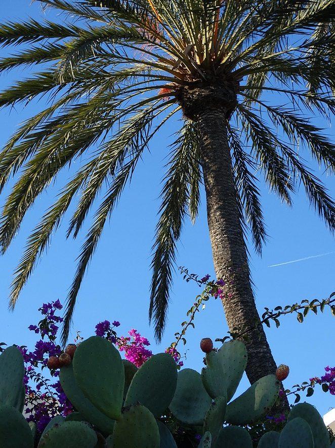 ibiza-winter-voorjaar