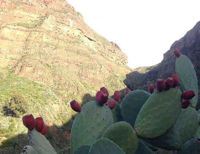 cactus-gran-canaria