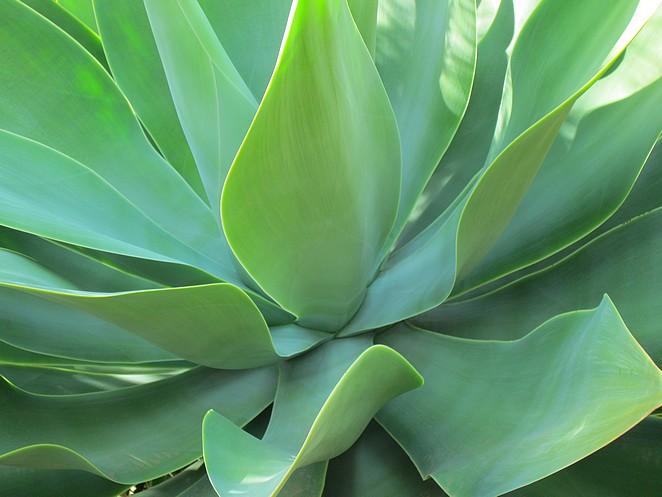 flora-gran-canaria