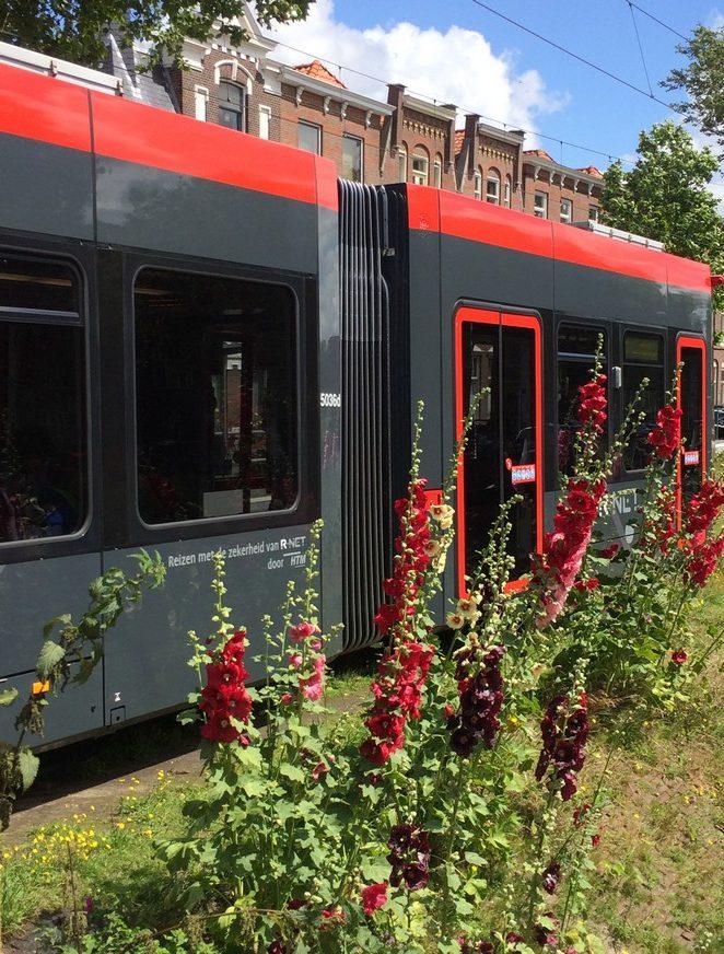 tram-11-conradkade