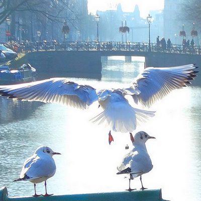 Boeken over de natuur in Nederland