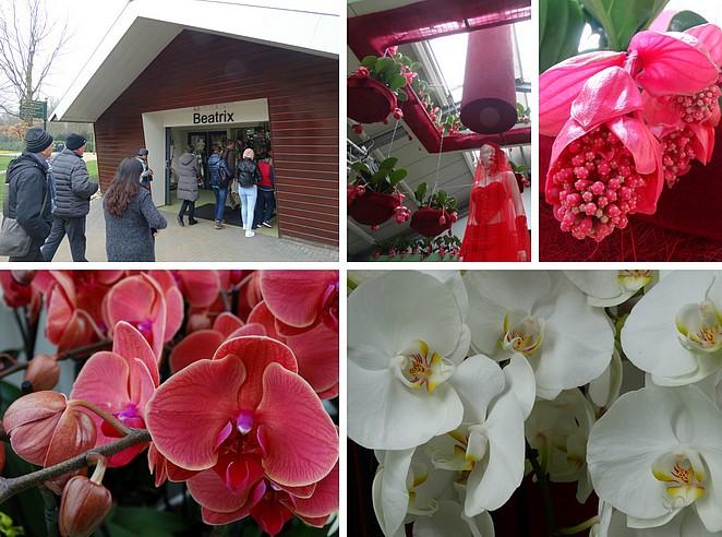 keukenhof-orchidee