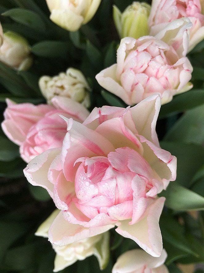 bloemen-fotograferen