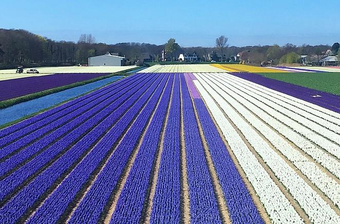 bollenvelden-nederland
