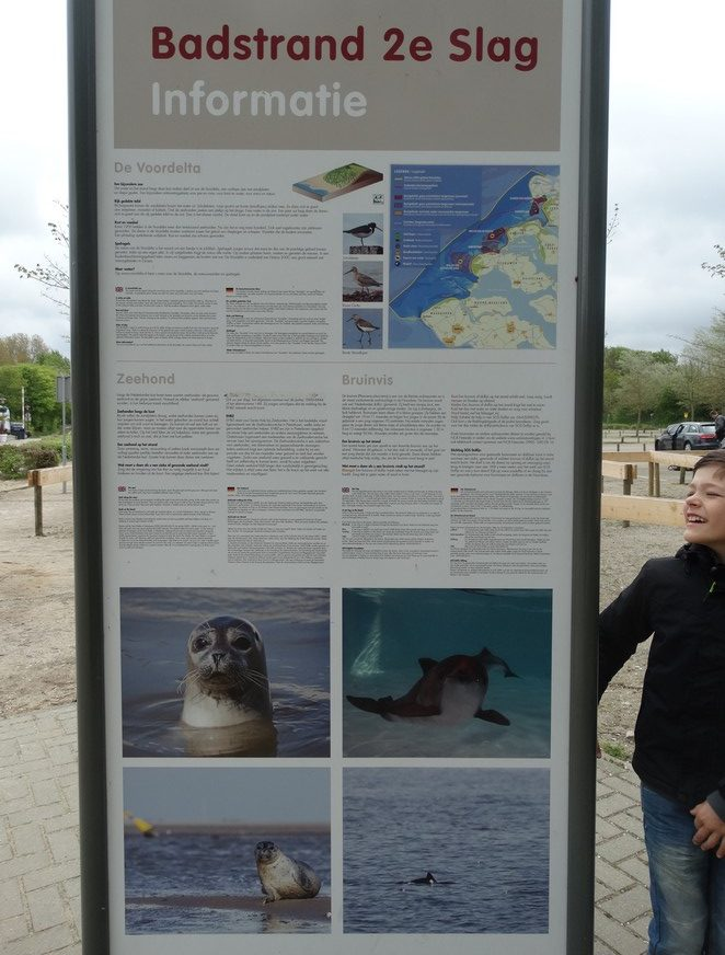 rockanje-zeehonden