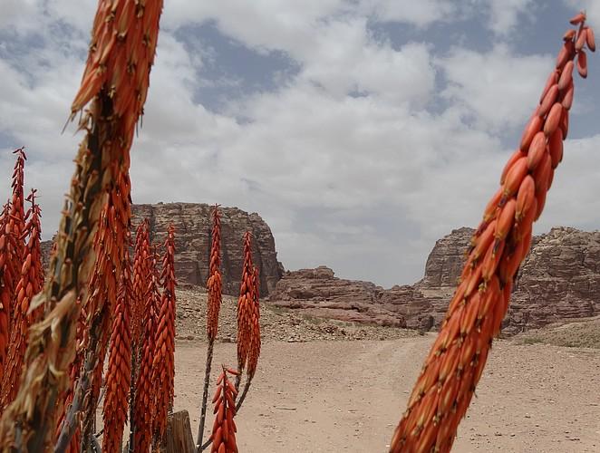mooiste-plekken-rondreis-jordanie