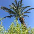 siblu-vakantieparken