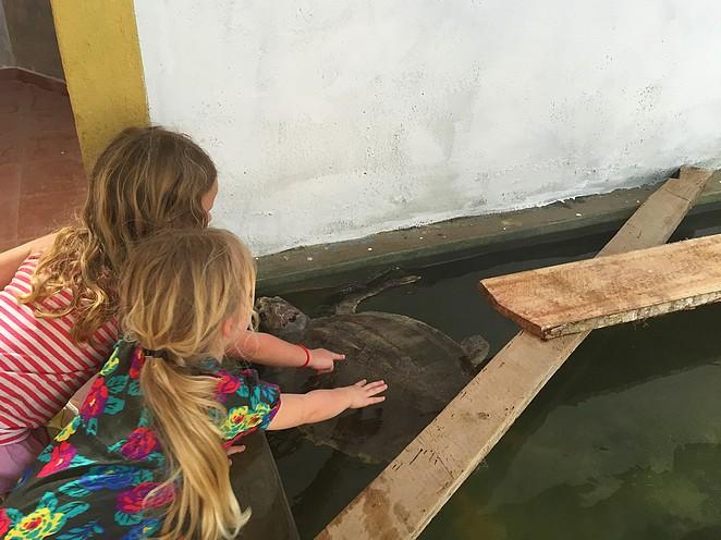 schildpadden-sri-lanka