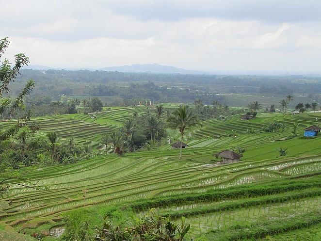 bali-rijstterrassen