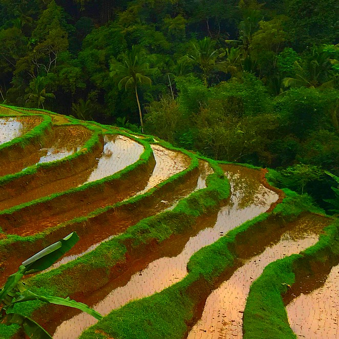 Picture perfect paddy fields: Jatiluwih rice terraces