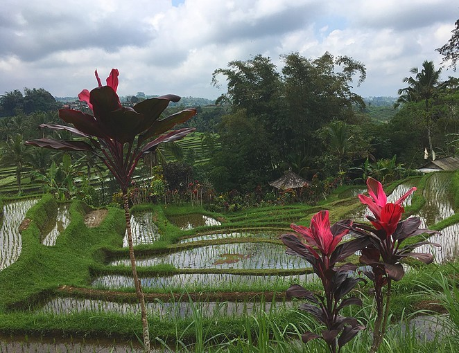 jatiluwih-rijstterrassen