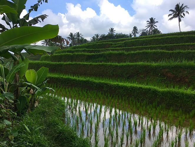 rijstterrassen-bali-jatiluwih