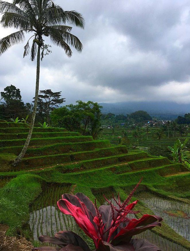 landschap-bali-rijstvelden