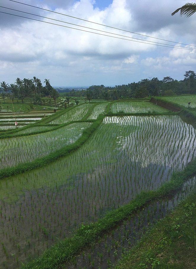 mooiste-rijstvelden