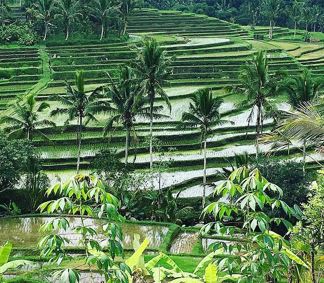 mooiste-rijstvelden-bali