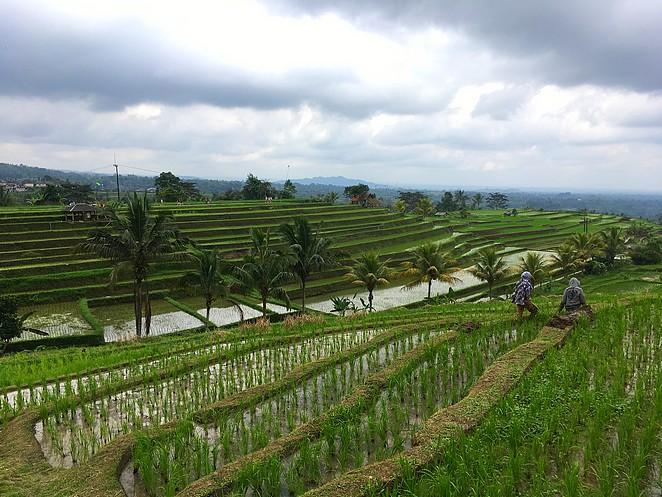 rijstboeren-bali
