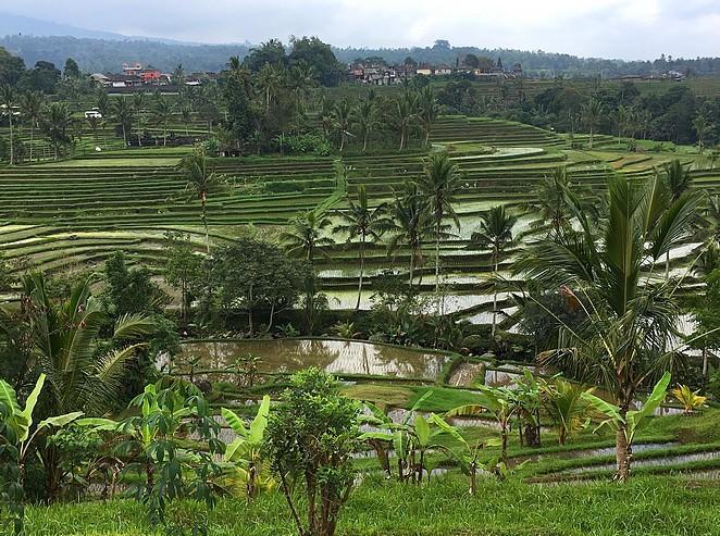 rijstvelden-bali-jatiluwih