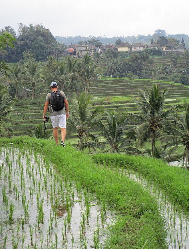 trekking-rijstvelden-bali