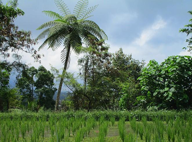 wandelen-rijstvelden