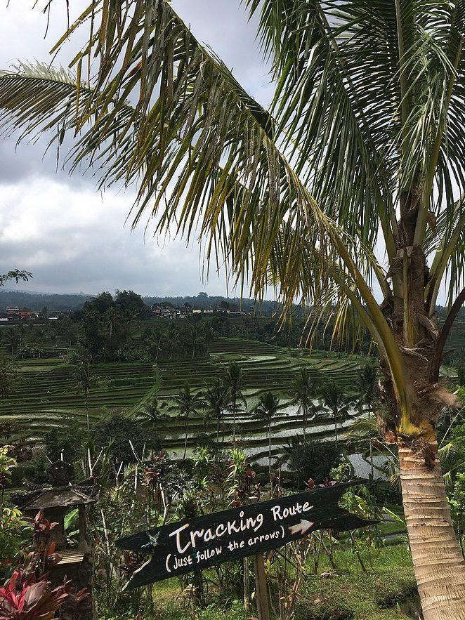 wandeling-rijstvelden