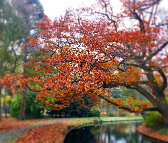 herfst-den-haag-wandelen