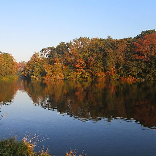 Bos en natuur in Den Haag: 7 plekken voor een herfstwandeling