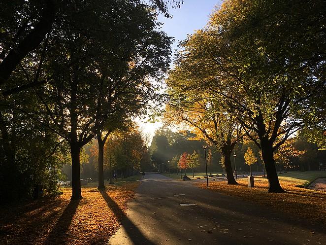 natuur-den-haag-herfst