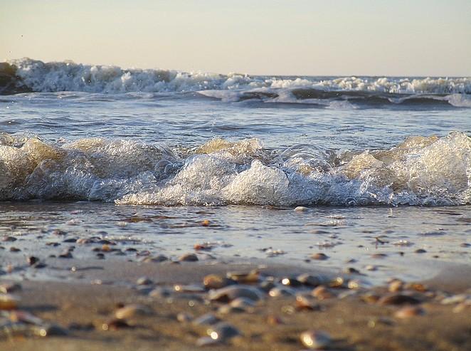 natuur-in-den-haag-strand