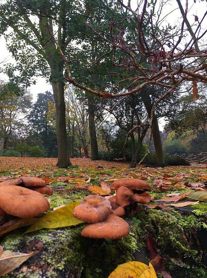 paddenstoelen-herfst-den-haag