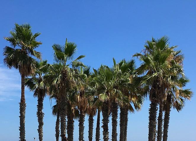 palmbomen-strand-barcelona