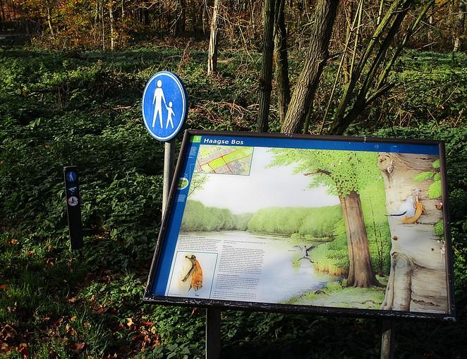 dieren-haagse-bos