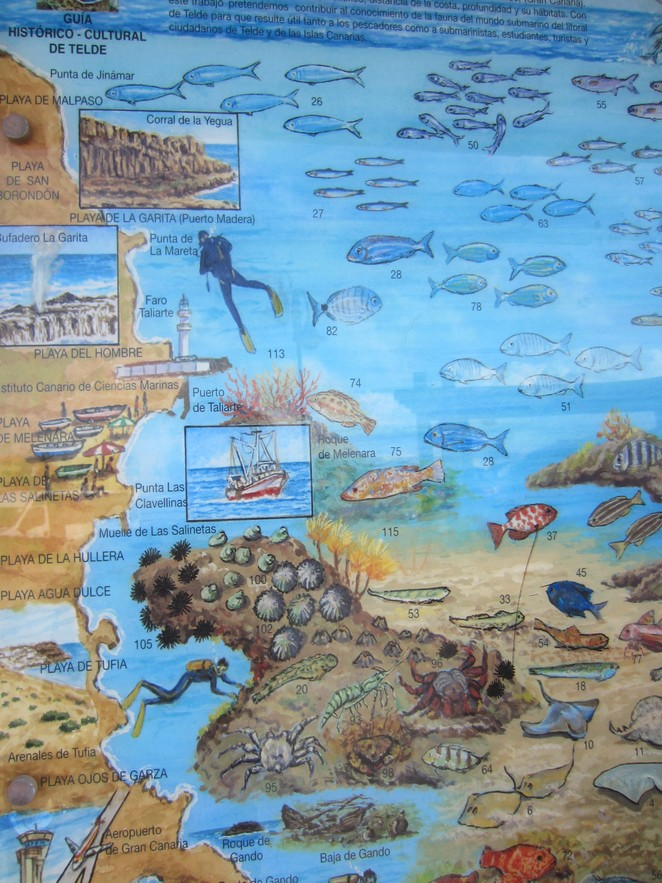 duiken-gran-canaria