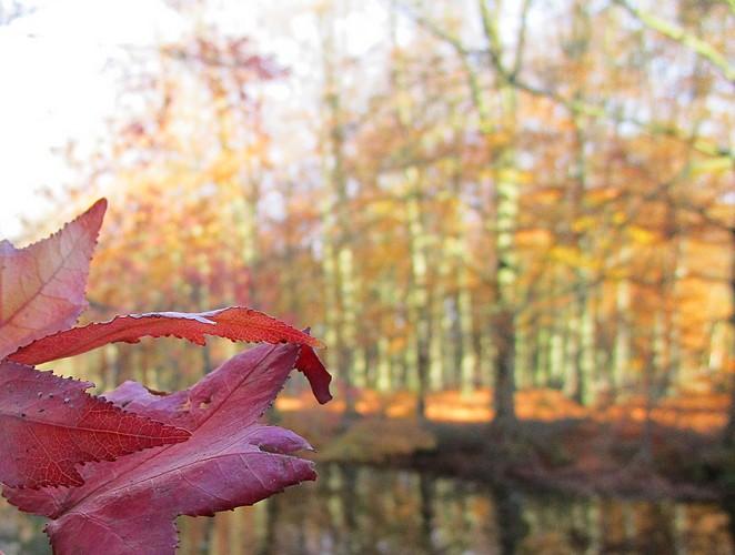 rode-herfstblaadjes