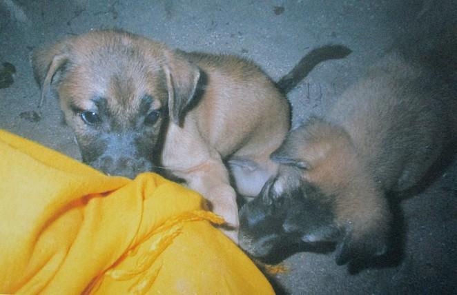 puppy-thailand
