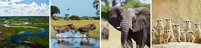 botswana-rondreis