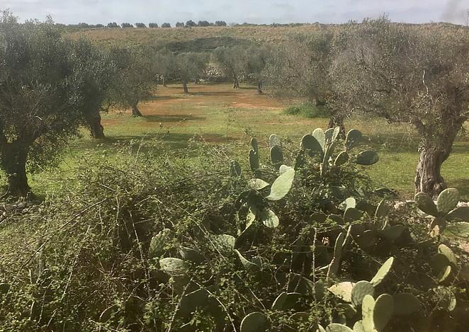 apulie-landschap