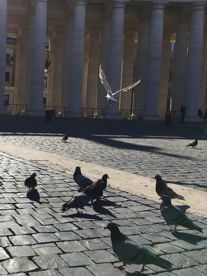 meeuw-en-duiven-vaticaanstad