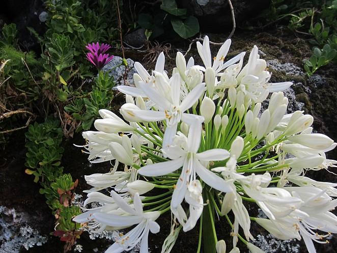 bloemen-aldeia-da-cuada