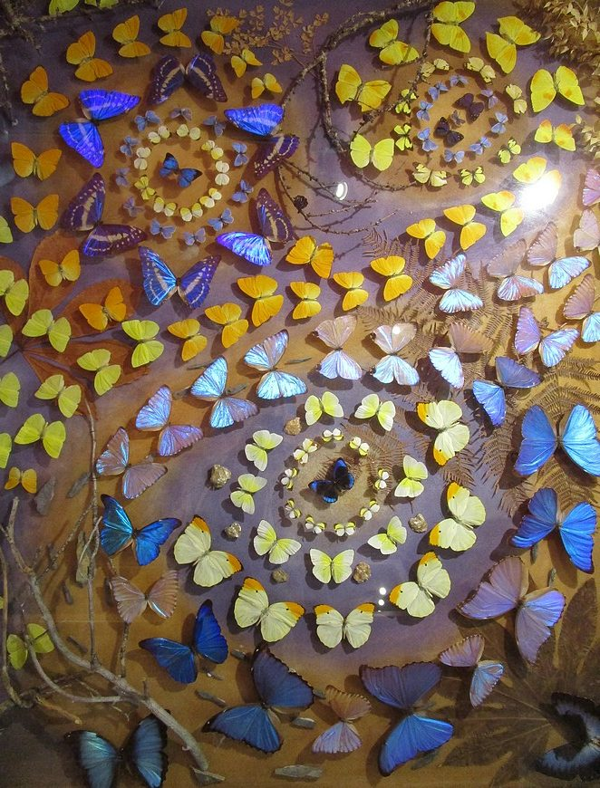 vlindermuseum-saint-tropez