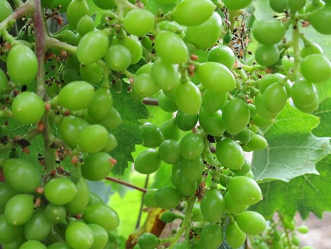 wijn-polopos