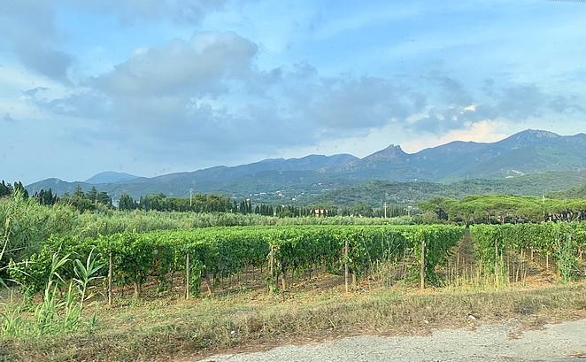 wijngaarden-elba