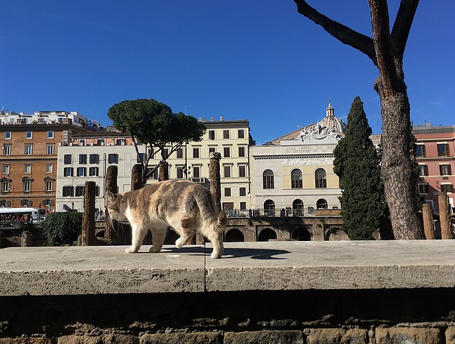 cat-sanctuary-rome