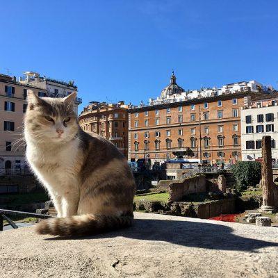 Katten kijken bij Largo di Torre Argentina in Rome