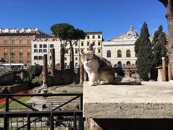 katten-kijken-rome