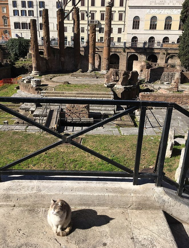 kattenopvang-rome