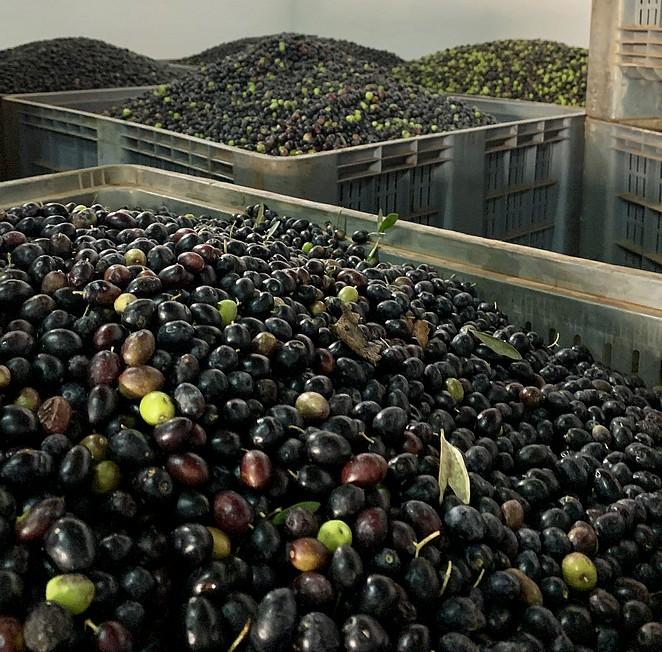 olijfoliefabriek-portugal