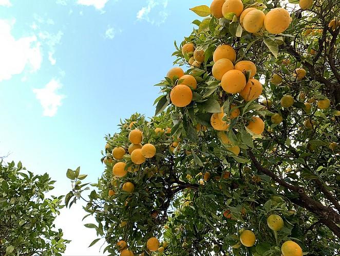 sinaasappelen-algarve